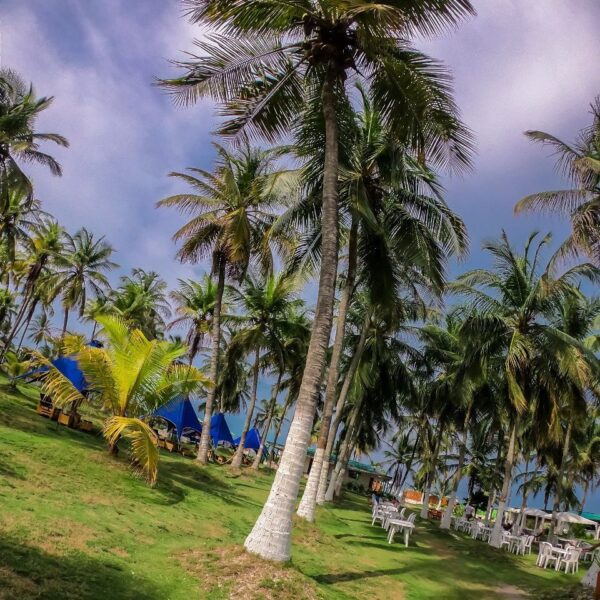 Albitours, pasadia tierra bomba, palmarito beach, playa palmarito beach, turismo en cartagena, isla tierra bomba, cartagena, pasadia palmarito 30