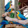 transporte aviario nacional de colombia